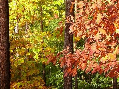 Zapraszamy na XXIII Ogólnopolski Rajd Ekologiczny